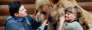 foto il giornale--famiglia russa con orso